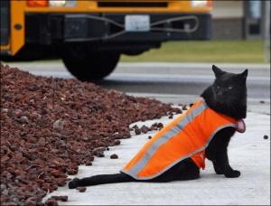 Crossing Guard Cat