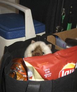 Stowaway in Food Bag