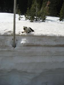 Flash on Snow